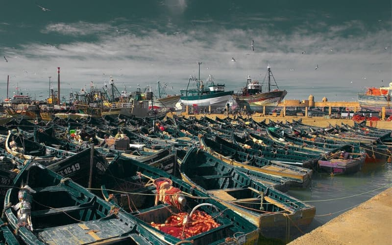 The Environmental Impact Caused By Industrial Fishing